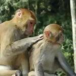 属猴女和什么属相相配 属猴女的最佳配对是什么