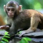 1980年属猴女人的婚姻配对 属猴女跟什么生肖配对好