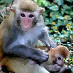 属猴的出生年份对照表分析