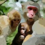 属猴的年份都有哪些呢