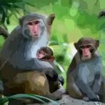 2016属猴的是什么命运势怎样