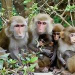 谈谈2016年出生的猴宝宝是什么命