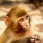 属猴人的一生命运怎样清楚吗