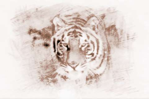 [红腹水虎]水虎的人运气运势和性格