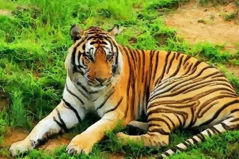 虎年分别是哪些年 什么年份出生的人是属虎