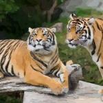 属虎的今年多大了2021 2021年属虎人年龄多大