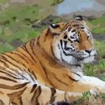 属虎的什么时辰出生最好 属虎人几点出生好命
