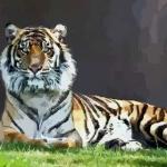 2021年属虎的几岁 生肖虎2021年多大年纪