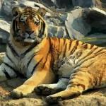 不同虎年出生的人命运 在虎年出生命运好吗
