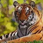 2021年属虎的年龄是多少 属虎人2021年几岁了