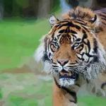 属虎的今年多少岁2021 生肖虎2021年多大了