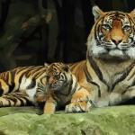 2021年属虎的今年几岁 属虎人2021年多少岁