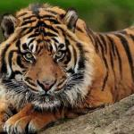 农历5月份出生的属虎人命运如何详细说明