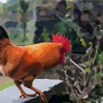 屬雞2020破太歲都要注意些什么?