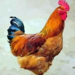 四月出生的属鸡人命运好吗是不是命苦之人