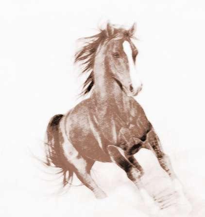 [马子是什么意思]属马子时出生的人命运