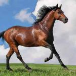属马在2021年的年龄多大 2021年属马人几岁了