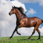 属马的2021年多大了 2021年属马人几岁