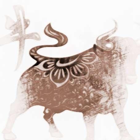 【属牛子时出生男】属牛子时出生的人命运