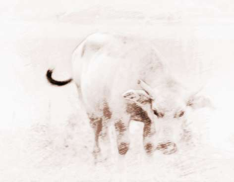 牛年是哪年?哪年出生的属牛人在2018能赚大钱