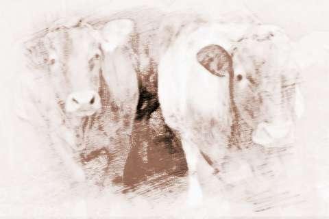 2019属牛的运势和财运_2019年属牛的财运如何
