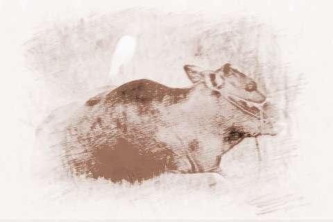 梦见水牛|水牛的人运气运势和性格