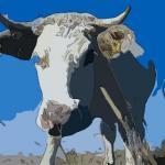 哪些月份出生的屬牛人運勢最差 牛寶寶要避免這月份出生