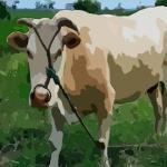 蘇民峰屬牛人2020年運勢