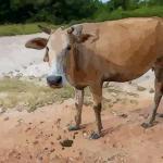 解读十二月出生的属牛人命运好吗