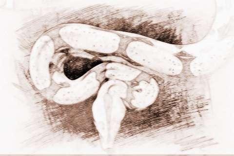 金蛇是什么_金蛇的人运气运势和性格
