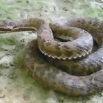 属蛇的人出生月的命运详解 这几个月生的生肖蛇命好