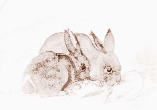 【易地扶贫】易玄2017年5月生肖属兔者运势