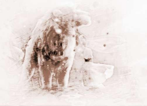 属蛇的狮子座血型v血型农历初八星座图片