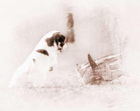 一十生肖有个动物是忘形的