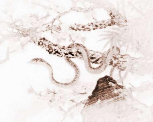 """杯弓蛇影:这也是形容人对蛇的极端恐惧之情,有点类似于""""一遭被蛇咬,十年怕井绳""""。杯弓蛇影是历史上的一个真实故事。据《晋书·乐广传》记载,乐广有个很亲密的客人,乐广问他为什么这么久没来作客。客人回答说:""""上次来的时候,承蒙你请我喝酒,刚要饮酒时,看见酒杯中有一条蛇,感来很恶心,喝下这杯酒之后就生病了。""""当时乐广客厅壁上挂着一把角弓,弓上用油漆画着一条蛇。乐广思量客人酒杯中的蛇就是角弓映在杯子中的影子,于是他又在客人上次坐过的地方重新请客人喝酒,问客人说:"""
