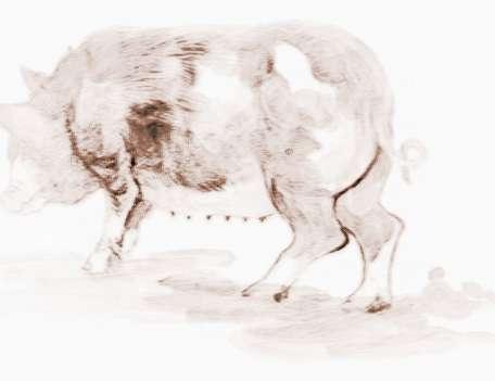 十二生肖猪的来历和传说故事