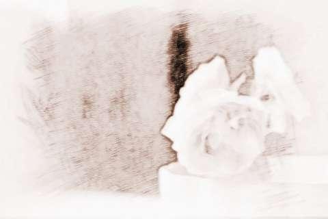 十二生肖桃花运势|十二生肖桃花运最旺盛的是谁?