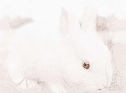 属兔狮子座的性格生日座水瓶喜欢的礼物女生图片