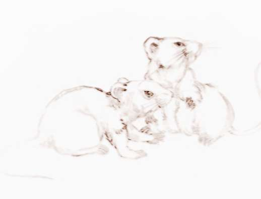 鼠年祝福语集锦