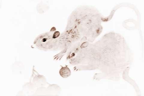 戊戌年2018属什么命 2018年11月属鼠人在哪方面走运最好