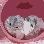 屬鼠和屬馬誰克誰嚴重 有什么好的化解方法