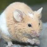 属鼠巳时出生的人命运最全讲解