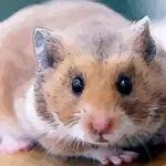 解析十月出生的属鼠人命运好吗