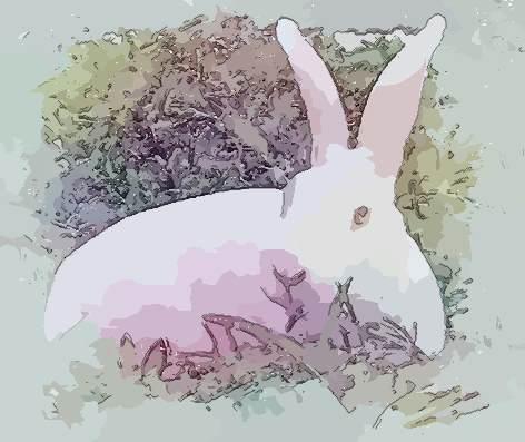 [属兔的几月出生好在2018年运势好不好]属兔的几月出生好?在2018年运势好不好?