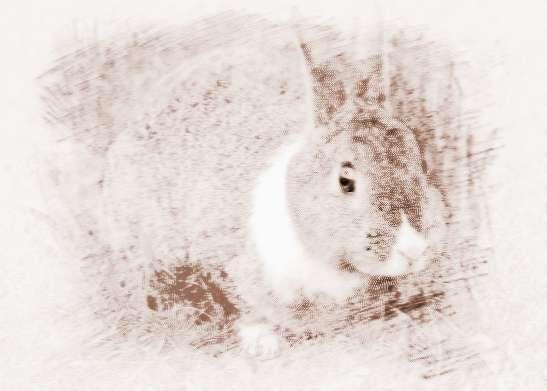 属兔的几月出生好对属兔人2015年_属兔的几月出生好?对属兔人2018年运势有何影响?