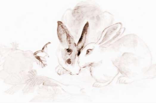 【属马性格特点及脾气】属兔宝宝性格特点