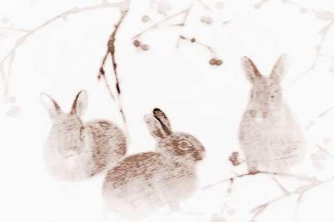[戊戌年2018属什么命]2018年11月属兔人在哪方面走运最好