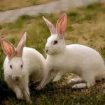 属兔人今年多大2021年 属兔人2021年几岁呢