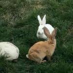 属兔人出生时的命运看富贵时辰