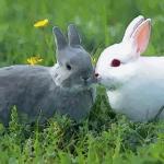 属兔人的一生运程解析应该要了解